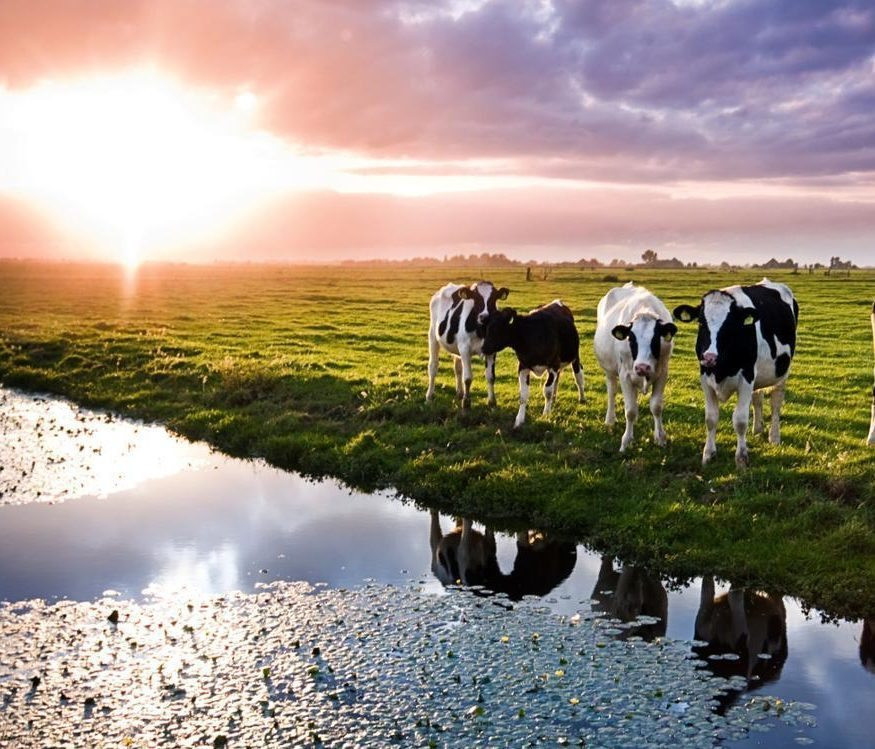 Veterinary Antibiotics In Agricultural Runoff In The Bc